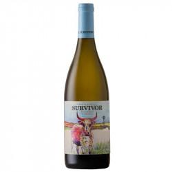 Survivor Chardonnay (case...